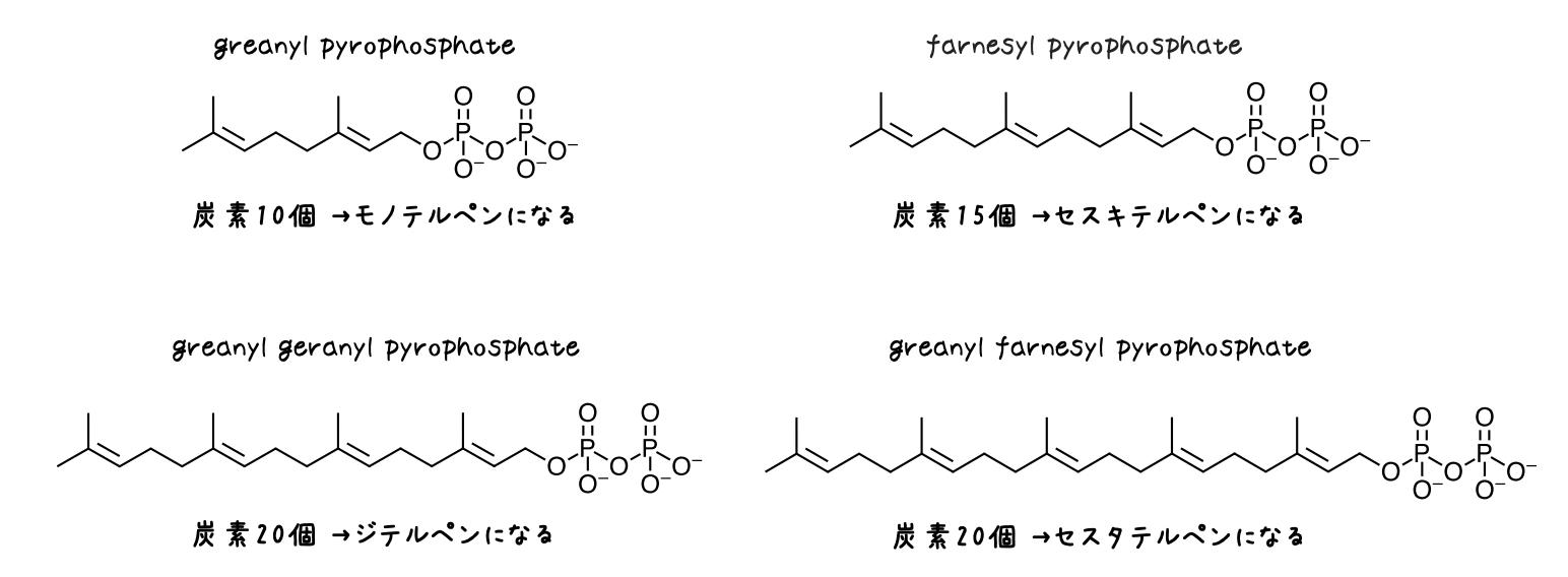 テルペノイド 生合成