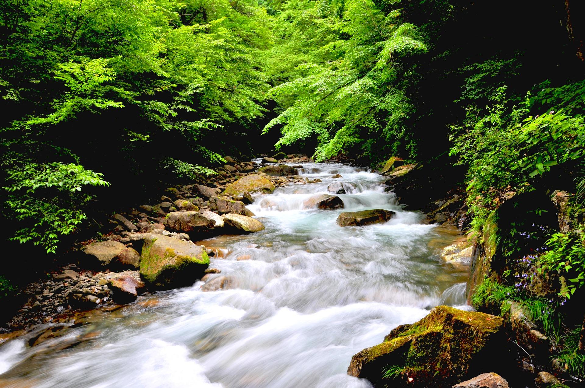 森林浴 写真