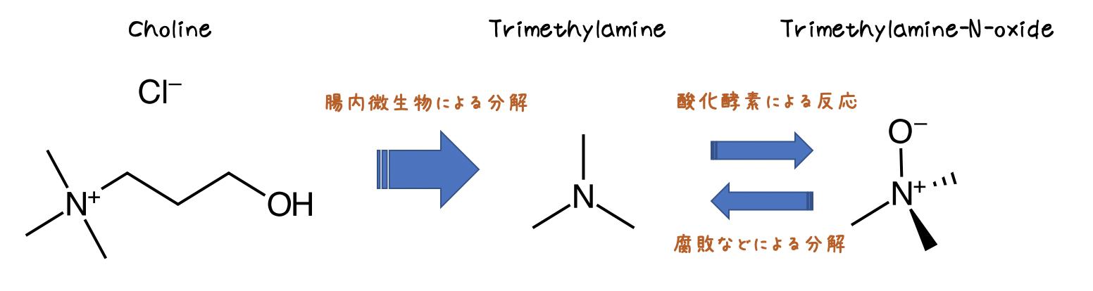 トリメチルアミン生合成