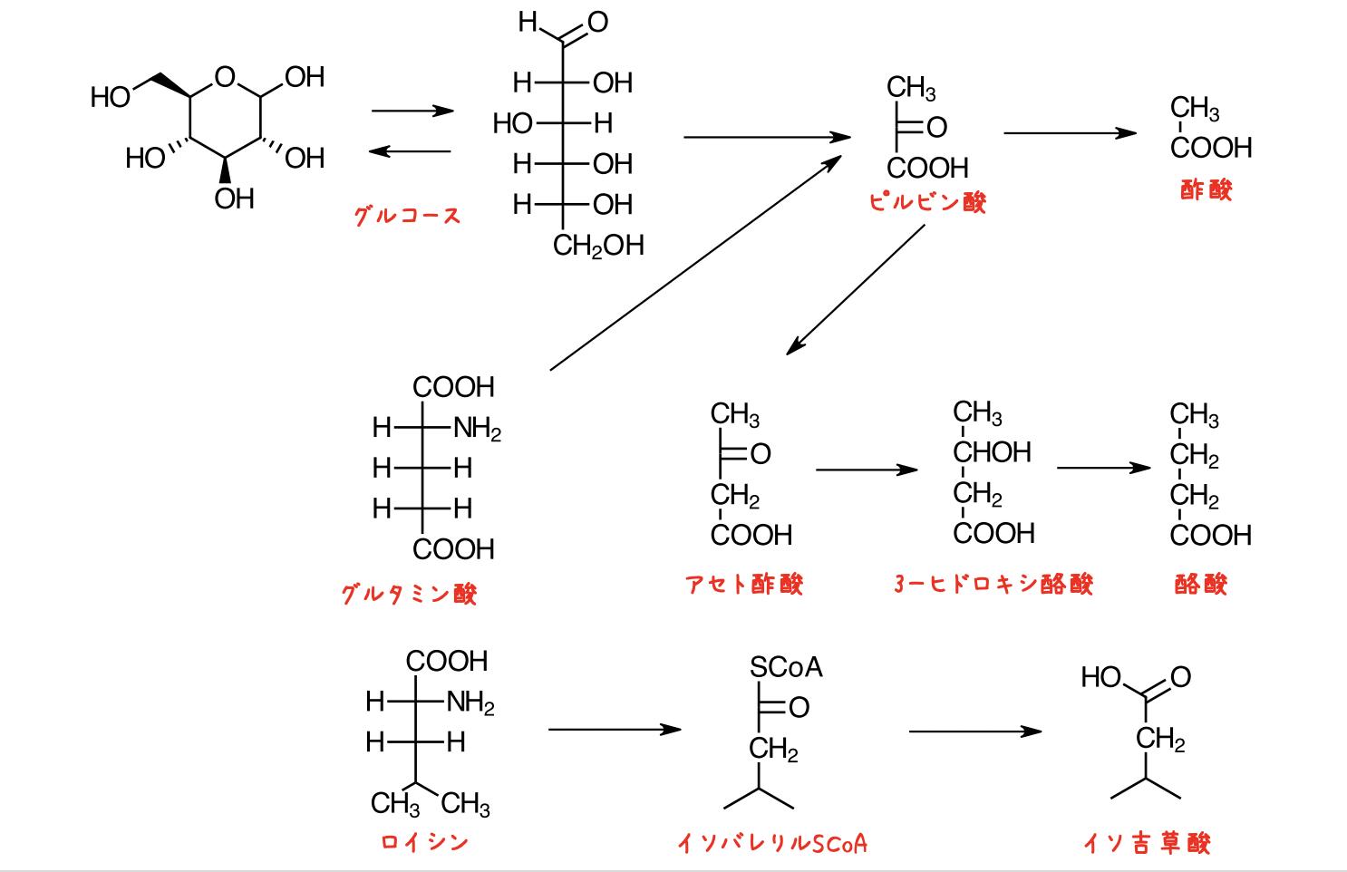 低級脂肪酸の悪臭物質の生成