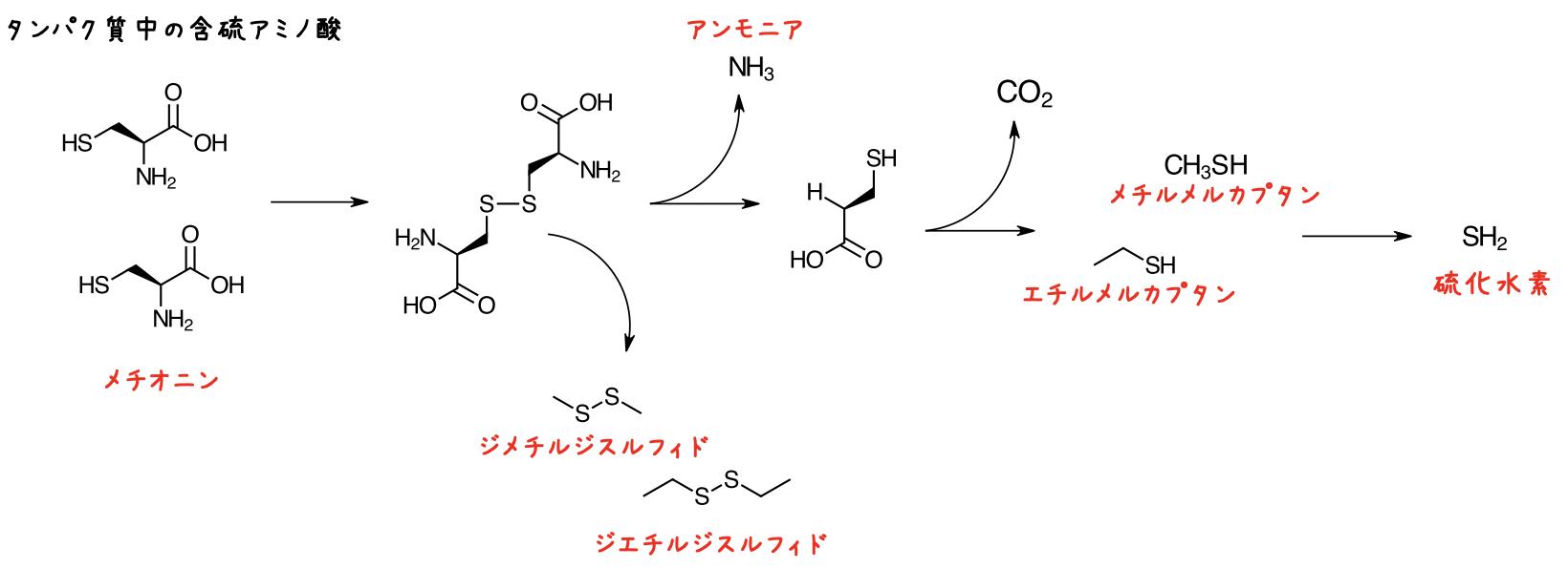 メチオニンの分解例