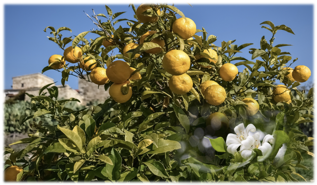 ビターオレンジ とオレンジフラワー