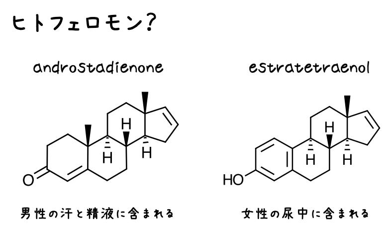 ヒトフェロモン?